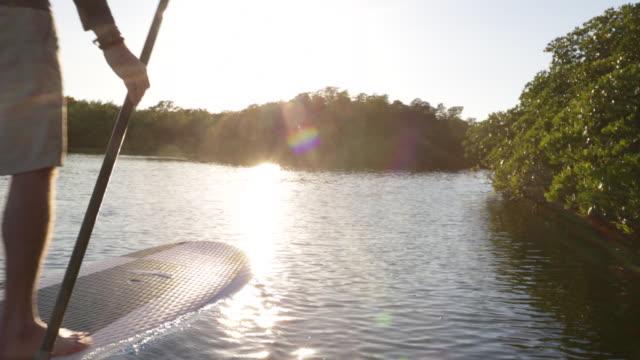 Senior man paddle boarding close to mangroves.