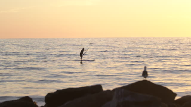 ws senior man paddleboarding in the ocean - lockdown viewpoint stock videos & royalty-free footage