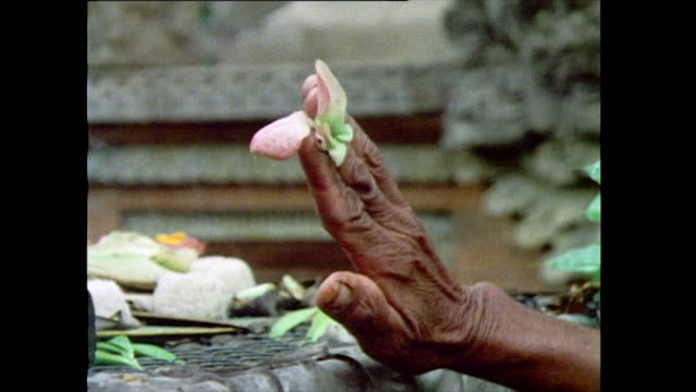 senior man performs a daily ceremony at a temple altar in bali; 1985. close-up of hand holding petal between fingers. cut - man placing a dish of... - sprinkling stock videos & royalty-free footage