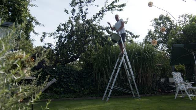 vidéos et rushes de a senior man picking fruits in his backyard garden from a fruit tree - échelle