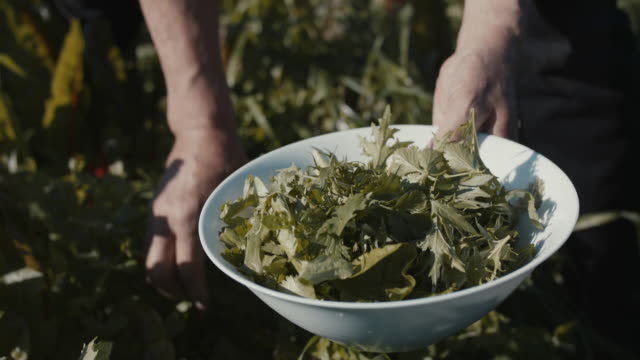 senior man picking herbs and salad into bowl with grandson - giardinaggio video stock e b–roll