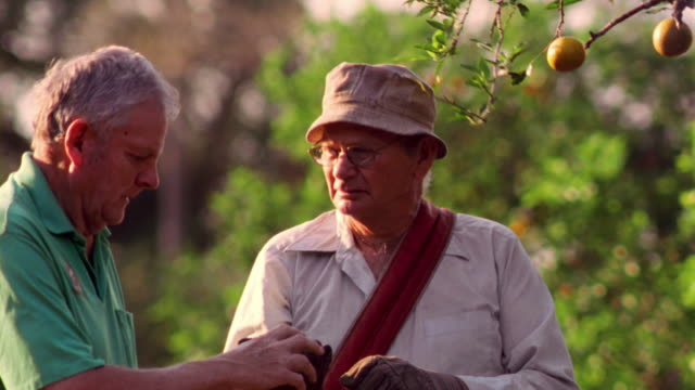 ms pan portrait senior man picking orange from tree in grove + giving it to second senior man - sonnenhut stock-videos und b-roll-filmmaterial