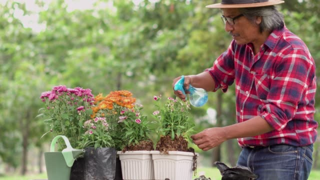 senior man planting flower in a potting and watering it. - weeding stock videos & royalty-free footage