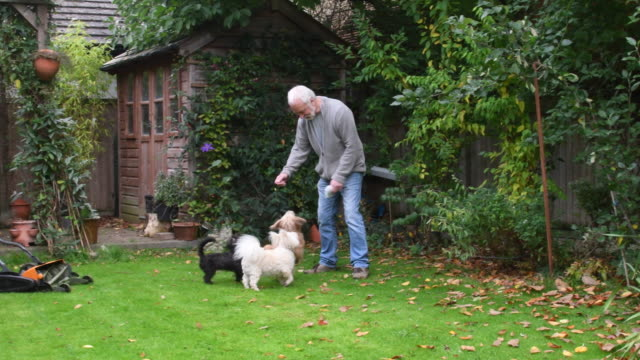 Senior man playing with pet dogs