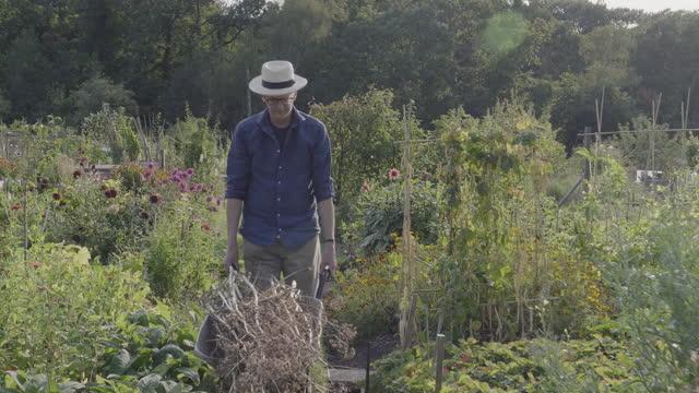 senior man pushes wheelbarrow at allotment. - weekend activities stock videos & royalty-free footage