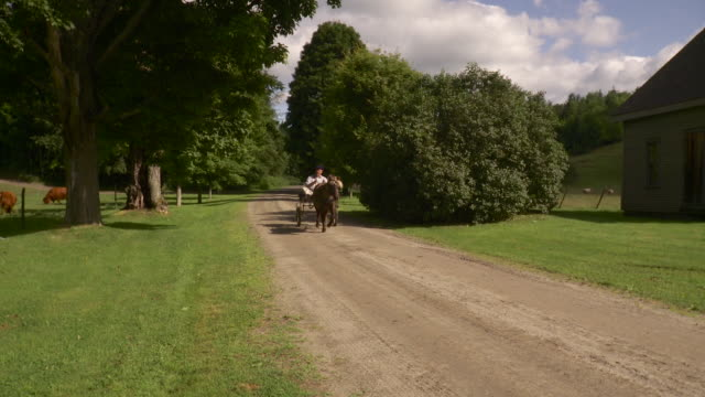 ws ts senior man riding on horse drawn carriage on dirt track / stowe, vermont, usa - stowe vermont stock videos & royalty-free footage