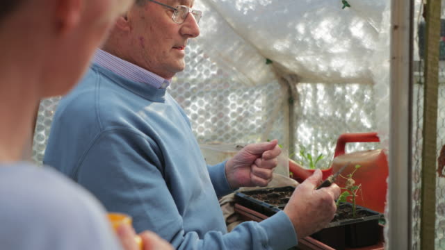 senior man showing his carer what to do when cutting plants - healthcare worker stock videos & royalty-free footage