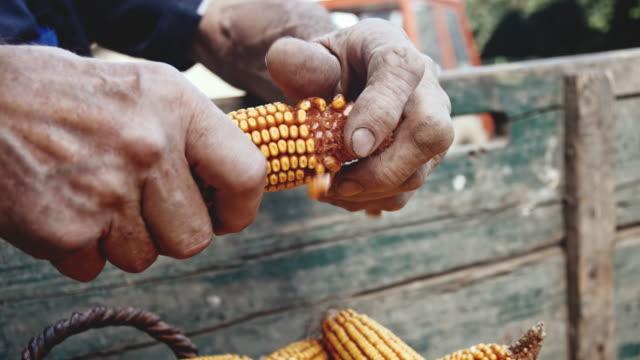 vídeos y material grabado en eventos de stock de slo mo senior hombre maíz ostiones - un solo hombre mayor