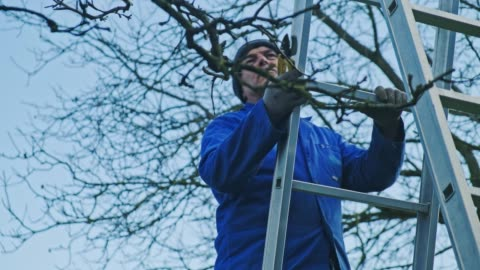 senior man standing on ladder and pruning tree - pruning stock videos & royalty-free footage
