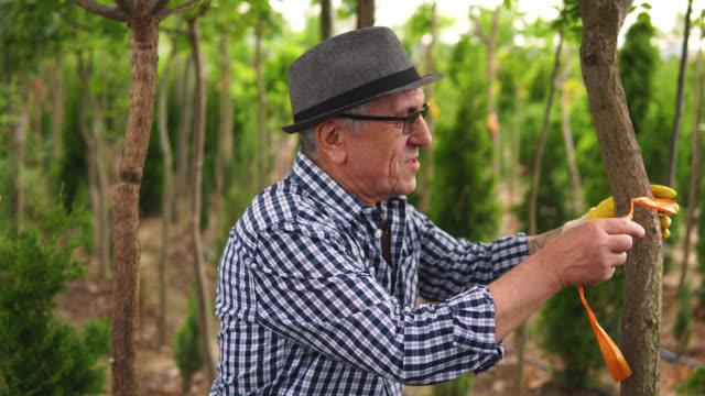 木の世話をする先輩男性 - 園芸学点の映像素材/bロール