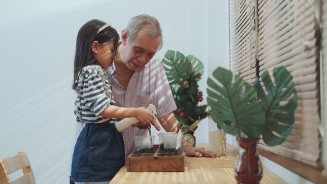 senior man teaching asian kid girl watering plant and flower in living room at house - cute cactus stock videos & royalty-free footage