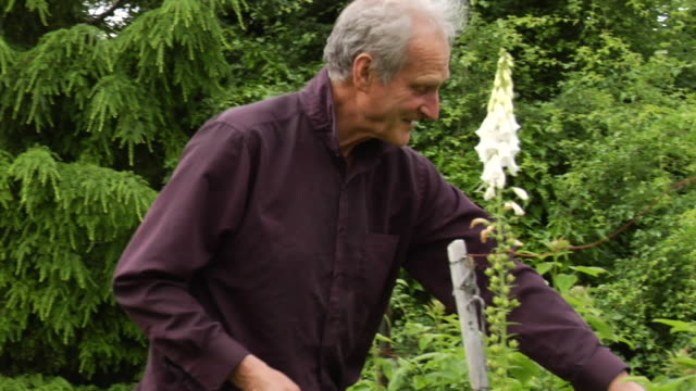 ms senior man tending to plants in garden/ vancouver, bc - laubbaum stock-videos und b-roll-filmmaterial