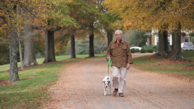 vídeos de stock e filmes b-roll de ws tu senior man walking along dog on driveway / richmond, virginia, usa. - trela de animal de estimação