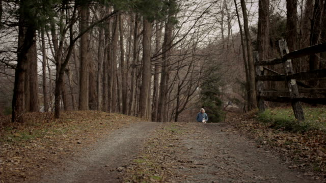 ws senior man walking down country path with his dog / kingston, new york, usa  - one man only stock-videos und b-roll-filmmaterial