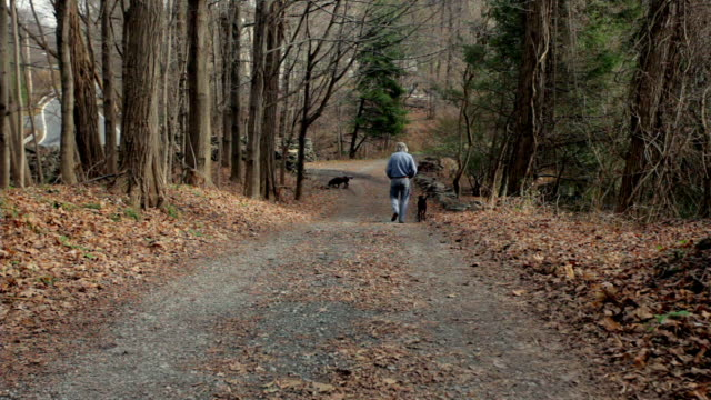 vídeos de stock e filmes b-roll de ws senior man walking down country path with his dogs / kingston, new york, usa  - parado