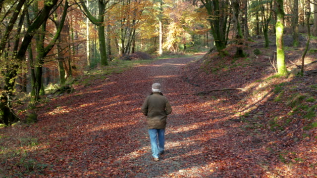 senior man walking in scottish woodland in south west scotland with autumn coloured leaves on the ground and trees - galloway scotland stock videos & royalty-free footage