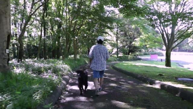 stockvideo's en b-roll-footage met senior man walks in the park with his dog. - gymbroek