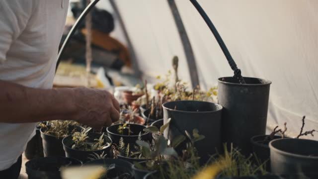 senior man watering plants in his greenhouse - fürsorglichkeit stock-videos und b-roll-filmmaterial