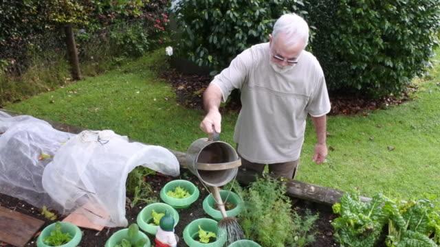 vídeos y material grabado en eventos de stock de senior man watering plants in vegetable garden - pasatiempos