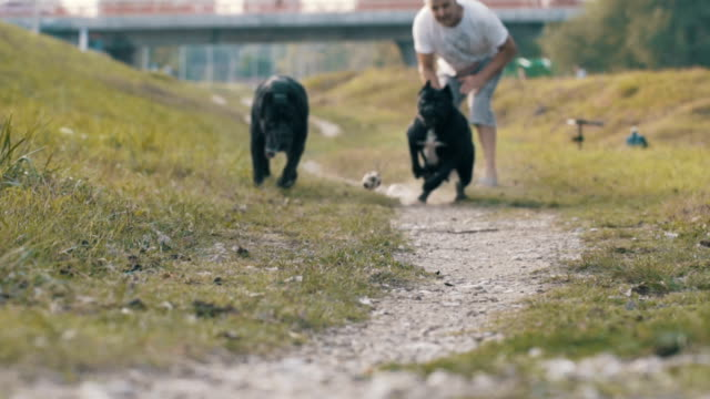 senior man with his dogs - animale da spettacolo video stock e b–roll