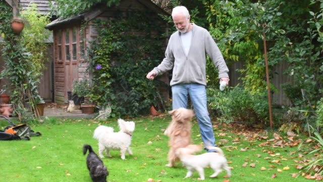 Senior man with pet dogs in back garden