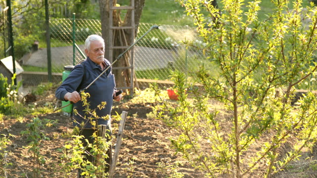 senior man working in a orchard, spraying herbicide with crop sprayer - herbicide stock videos & royalty-free footage