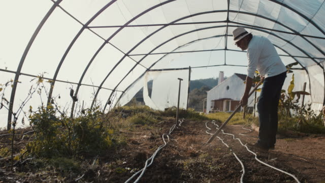 senior man working in his greenhouse - active seniors stock videos & royalty-free footage