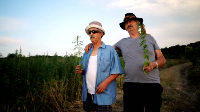 senior men smelling cannabis plant - herb stock videos & royalty-free footage