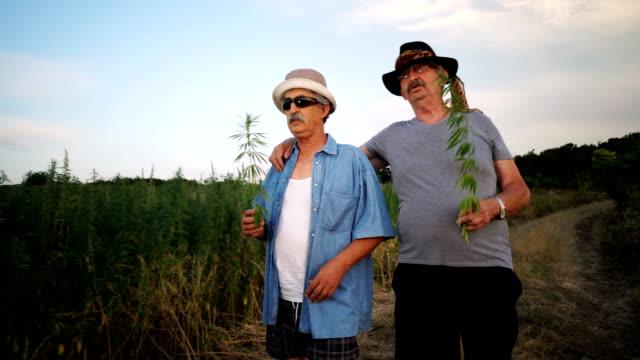 senior men smelling cannabis plant - marijuana herbal cannabis stock videos and b-roll footage