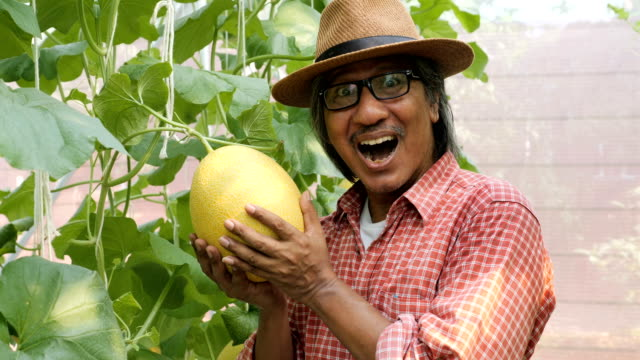 Senior middle aged male farmer happy with his farm product, cantaloupe melon.