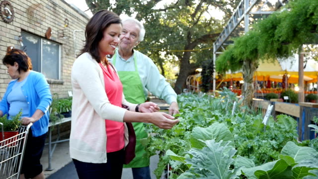 senior nursery manager explains care of kale to mid-adult caucasian woman - kale stock videos and b-roll footage