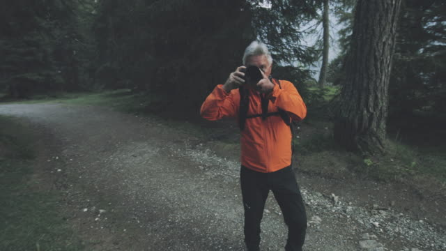 senior photographer hiking in the forest of the dolomites, italy, taking pictures - bird watching stock videos & royalty-free footage