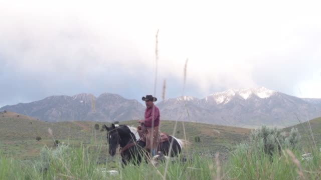 senior rancher rides up to stop on hill and take a look around - rancher stock videos & royalty-free footage