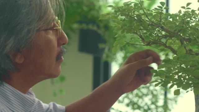 senior taking care of a bonsai - working seniors stock videos & royalty-free footage