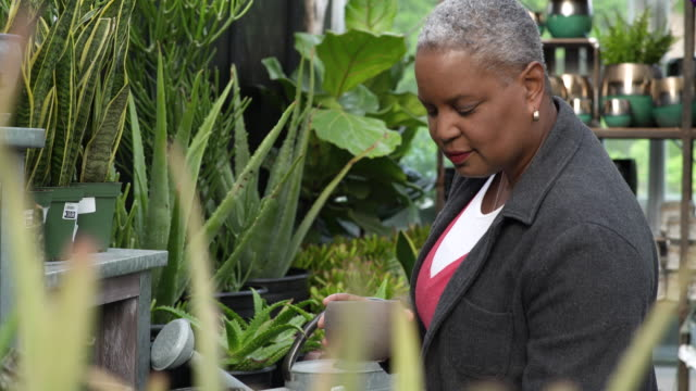 senior woman checking on pots in a greenhouse - whidbey island stock videos and b-roll footage
