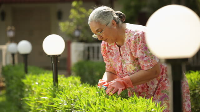 Senior woman cutting hedge from scissors
