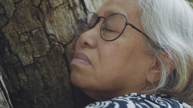 senior woman embracing nature - tree hugging stock videos & royalty-free footage