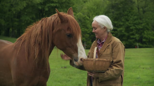 MS Senior woman feeding and stroking horse in lush forested field / Stowe, Vermont, USA