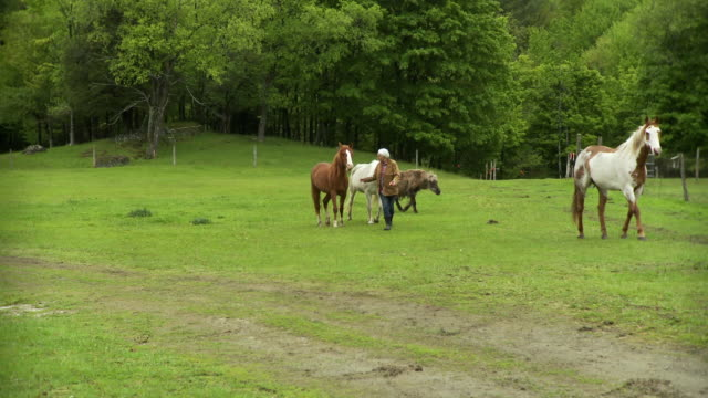 WS PAN Senior woman feeding apple to horses in lush forested field / Stowe, Vermont, USA