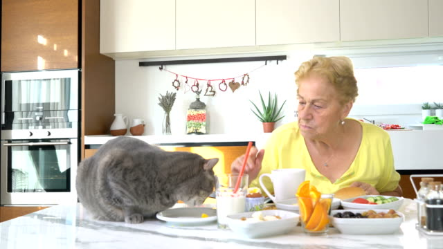 Senior woman feeding the fat cats in the kitchen