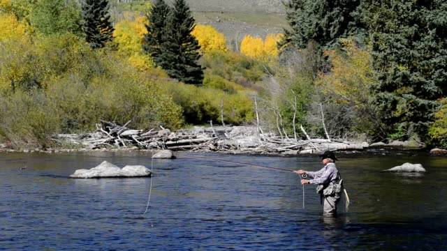 senior woman fly-fishing in colorado - fly fishing stock videos and b-roll footage