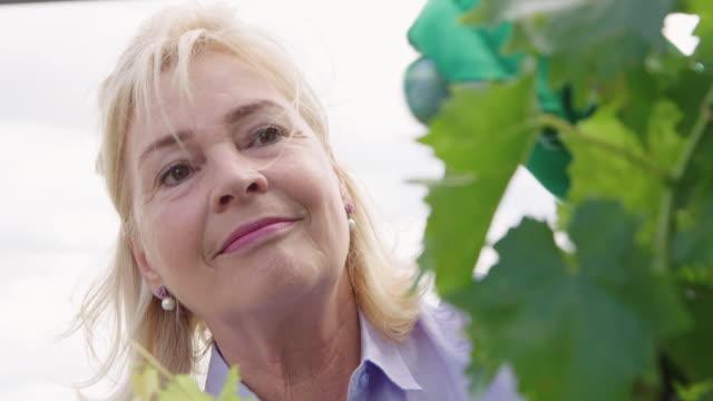 senior woman gardener working in greenhouse - vite flora video stock e b–roll