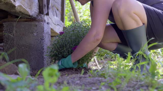 senior woman gardening in back yard - weekend activities stock videos & royalty-free footage