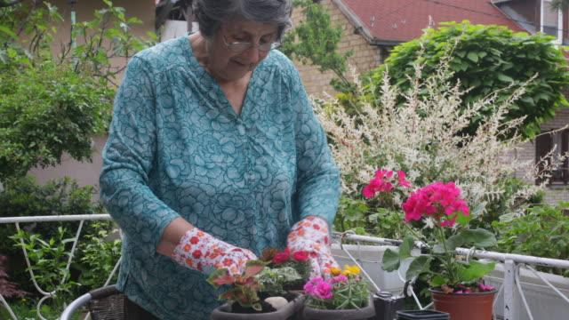 senior woman gardening - patio video stock e b–roll