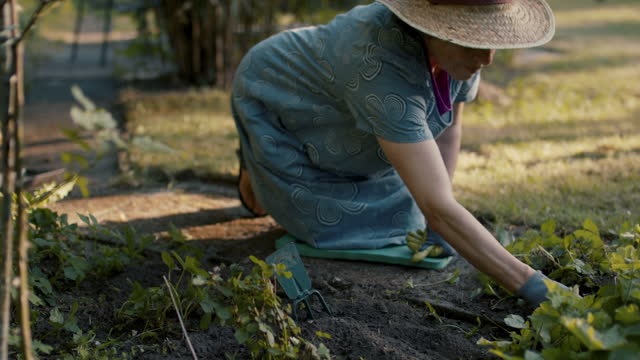 senior woman gardening - weeding stock videos & royalty-free footage