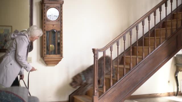 ws senior woman getting ready to take her dog for a walk - 階段点の映像素材/bロール