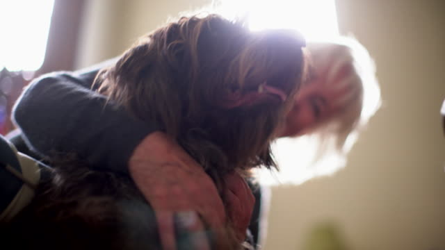 cu senior woman hugging her big dog - joy stock videos & royalty-free footage