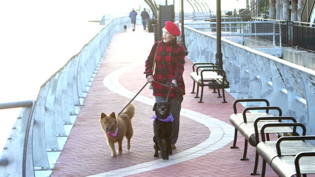 senior woman in city, walking two dogs - dog walker stock videos and b-roll footage