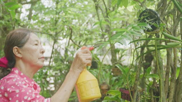 彼女の蘭の庭で4k cuシニア女性 - ガーデニング点の映像素材/bロール