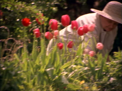 senior woman in straw hat gardening - straw hat stock videos & royalty-free footage